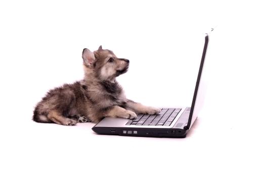 Hund_laptop