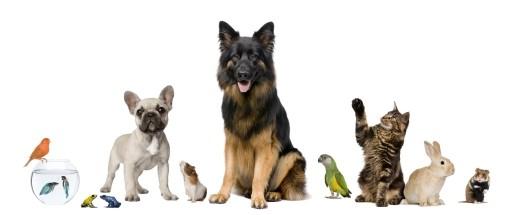 Bilde av diverse dyrearter